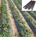 hot sale black platic mulching sheet price