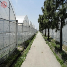 Lower price 12m multi span plastic greenhouse film fastening for tomato