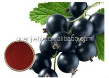 High Quality Natural Black Currant Extract