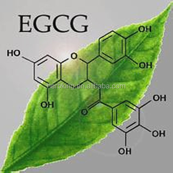 Green tea extract with 98% Tea Polyphenols,L-Theanine,EGCG,catechins