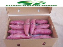 Fresh vegetables fresh potatoes organic japanese purple sweet potato