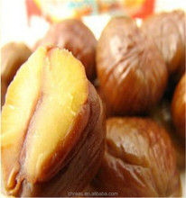 chestnut beauty