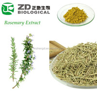 Rosemary Extract Natural Preservative Rosmarinic Acid in Medicinal Herbal Plants
