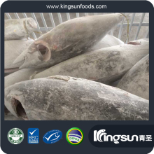 fresh frozen -60 treatment HGT Yellow fin tuna for sale