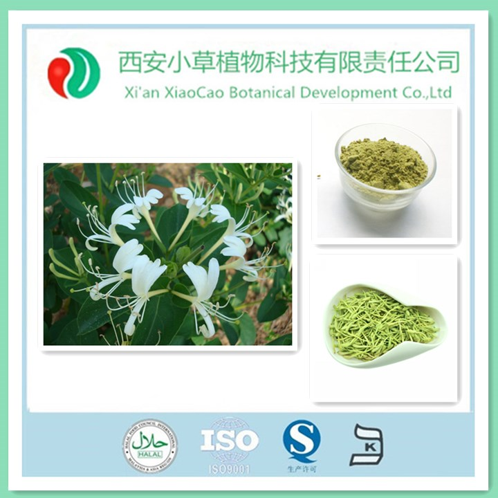 GMP Standard Manufacturer Supply HoneySuchle Flowers Extract,7:1,5%~98% Chlorogenic acid