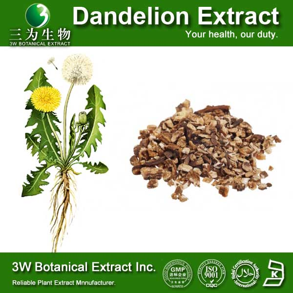 Food Grade Supplement Dandelion Root Powder Dandelion Plant Extract Dandelion Extract Flavonoid