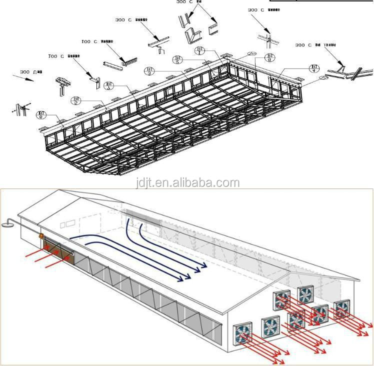 full automatic eggs collection system for poultry chicken birds breeding layer rearing farming house shed equipment