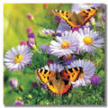 High quality 3d lenticular decorative pictures poster with flower and butterfly