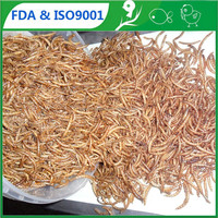 FDA pet food suppliers wellness animal feed mealworms_tenebrio