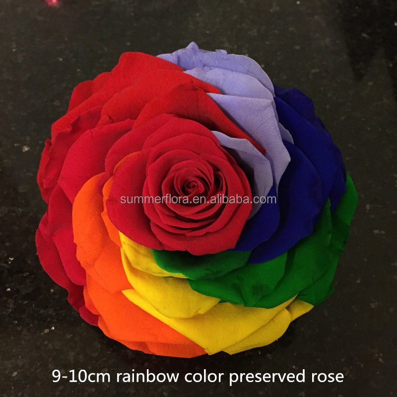 2016 best selling item natural rainbow color large preserved roses flowers