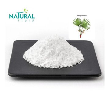 Saw Palmetto Powder Extract at Low Price with Natural Field