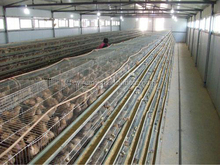 layer quail breeding cages for sale