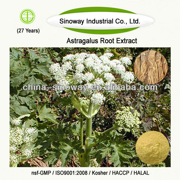 plant extract angelica