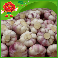2016 new corp Chinesse fresh pure garlic price white type