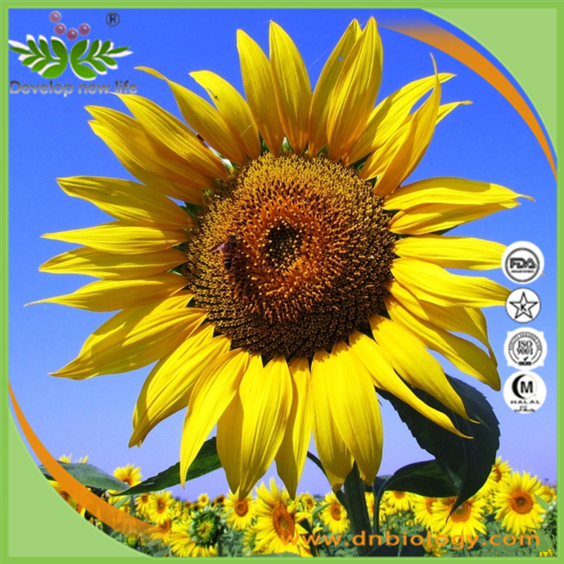 Top quality Sunflower Lecithin Powder / Sunflower Seed Extract