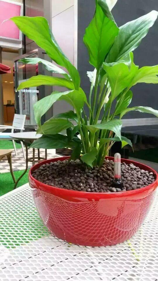 Decorative Handmade Pots Garden Self Watering Planter