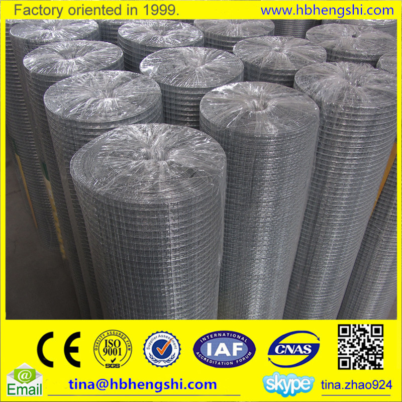 High quality Welded wire Mesh / Hardware Wire Cloth / Welded wire fabric rolls ( Factory price )