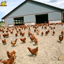 Factory Price Prefabricated Steel Structure Chicken House for Sale