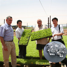 manufactures Super Absorbent sap hydrogel for agriculture use