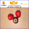 polystyrene Artificial fruit for christmas decoration Craft