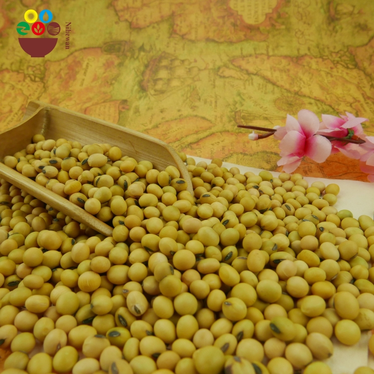 Chinese Agriculture Products Natural Dried Yellow Soybean