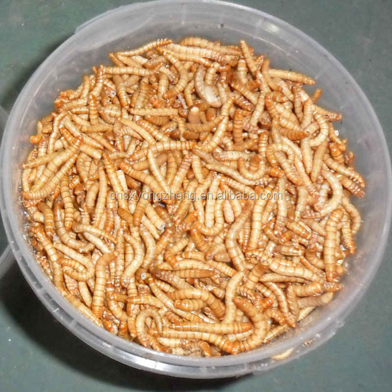 Wholesale pet food freeze dried food mealworm, fish feed mealworm