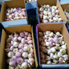 /product-detail/new-garlic-60768924569.html
