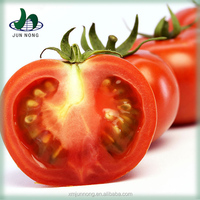 High Quality Agricultural Greenhouses For Tomato