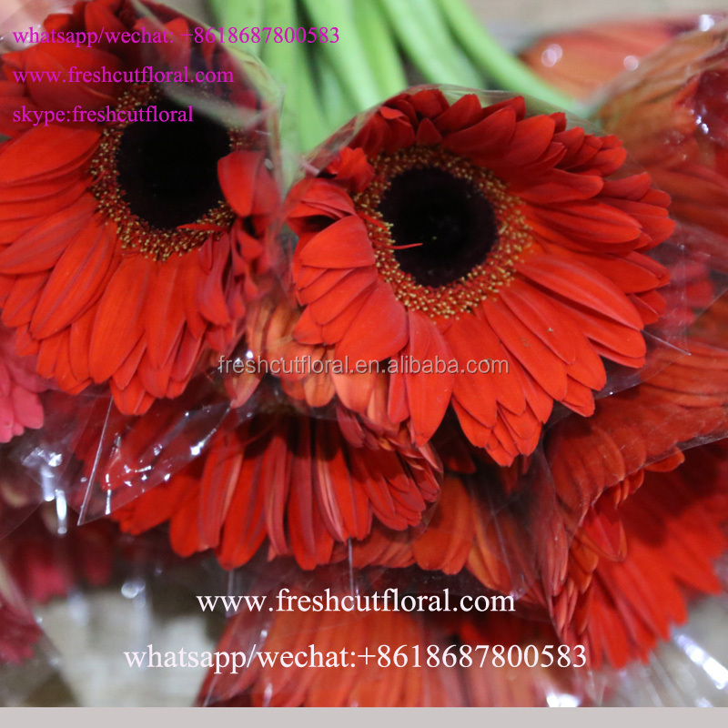 ProfessionalOffer Fresh Florist Gerbera Price For Party Decoration
