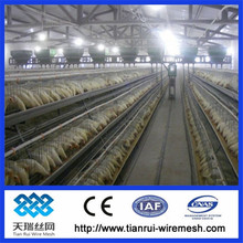 New Design large scale A type 3-tier battery cages chicken cages