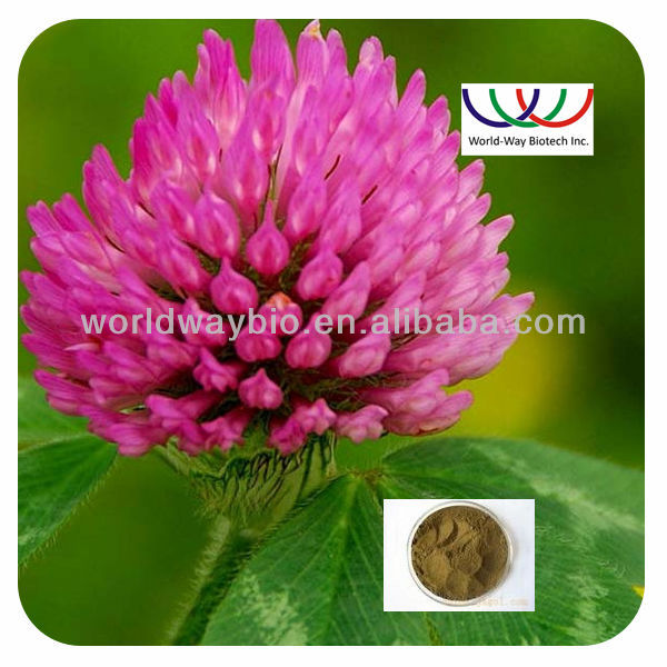 organic red clover extract for hair