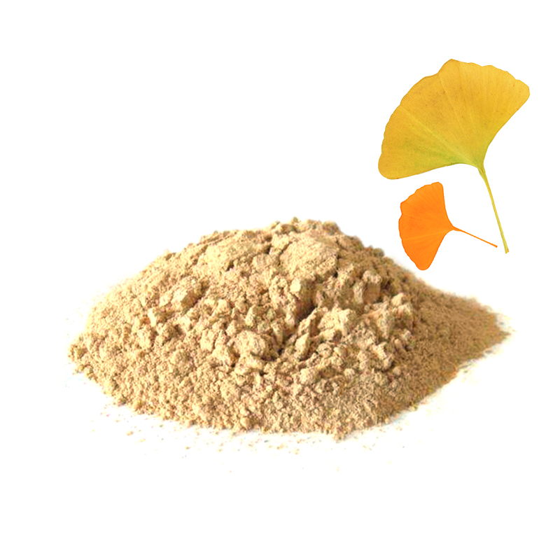 Antioxidant green health ginkgo biloba dry leaves extract herb vars ginkgo herbal powder