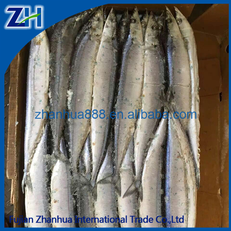 BQF Frozen Pacific Saury Price Fish Whole Round