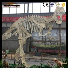 DW-0094 High quality realistic life size dinosaur skeleton replicas