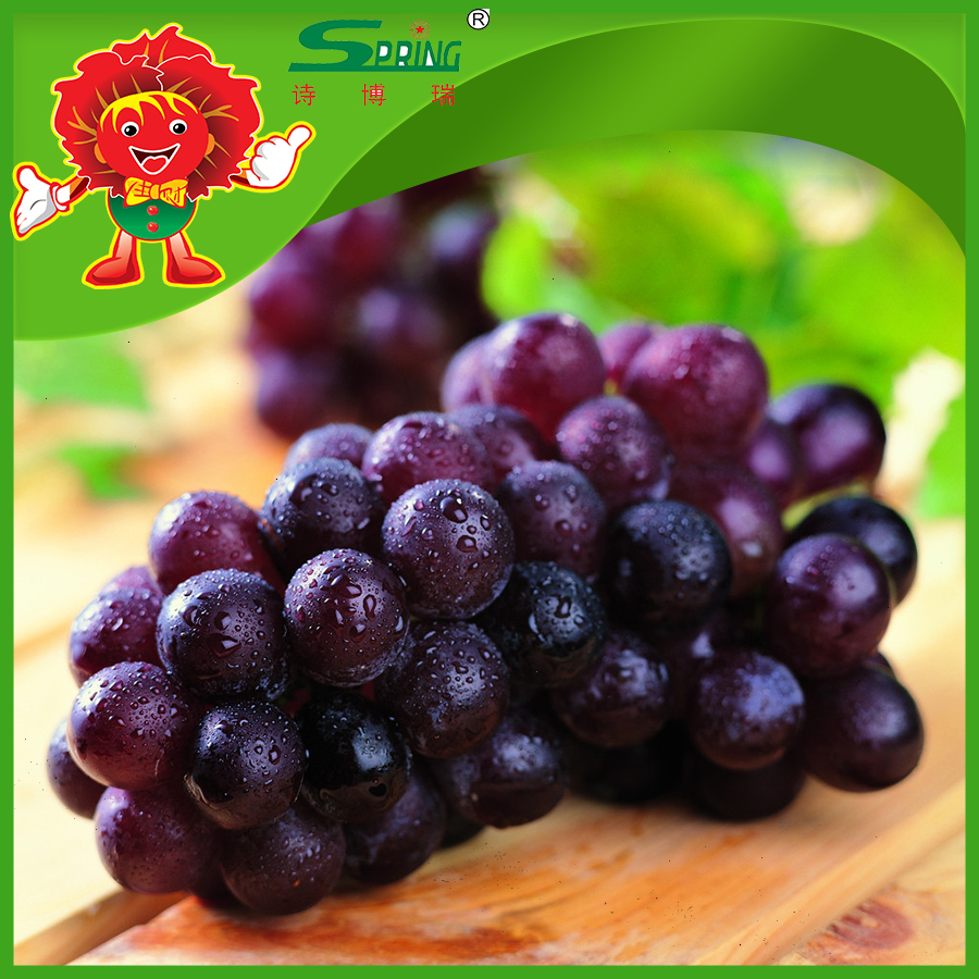 Fresh fruit Sweet Black seeded Grapes with low prices