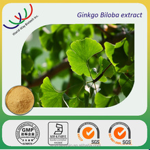 GMP factory making pure natural Dietary supplements 24/6 folium ginkgo extract