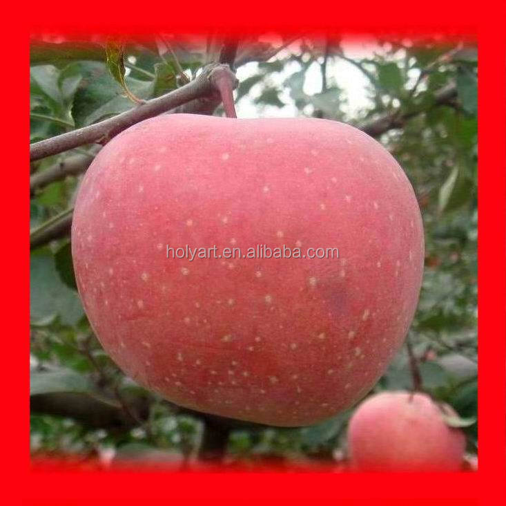 Hot sale wholesale prices apple fruit