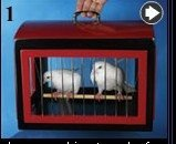 Transformation of Dove Cage into Rabbit Cage