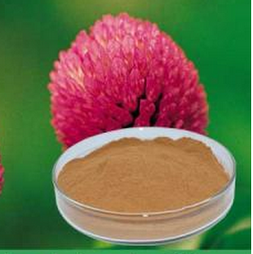Natural Extract of Red Clover Extract
