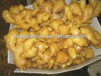 china ginger factory/competitive price