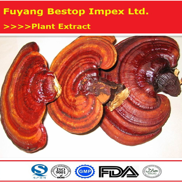 Ling Zhi Chinese herbal medcine 100% Natural Reishi Mushroom Extract