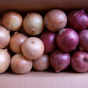 From China Newest red onion/fresh onion