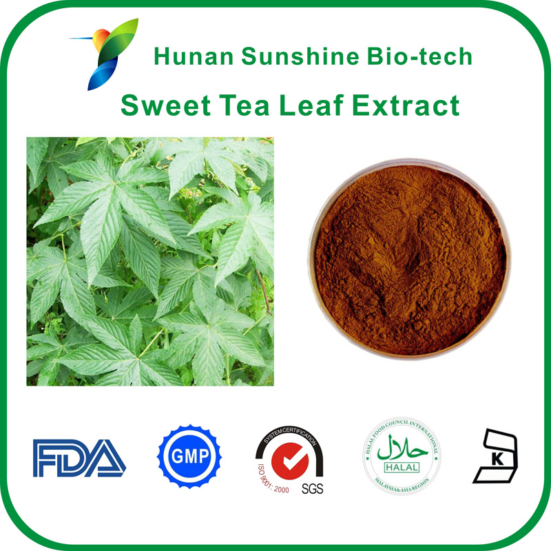 sweet tea leaf extract market in medicine industry