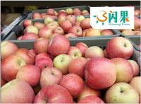 Top good taste fuji apple fruit supply all year at Wholesale Prices