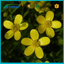best selling products Ranunculus ternatus Thunb extract powder bulk