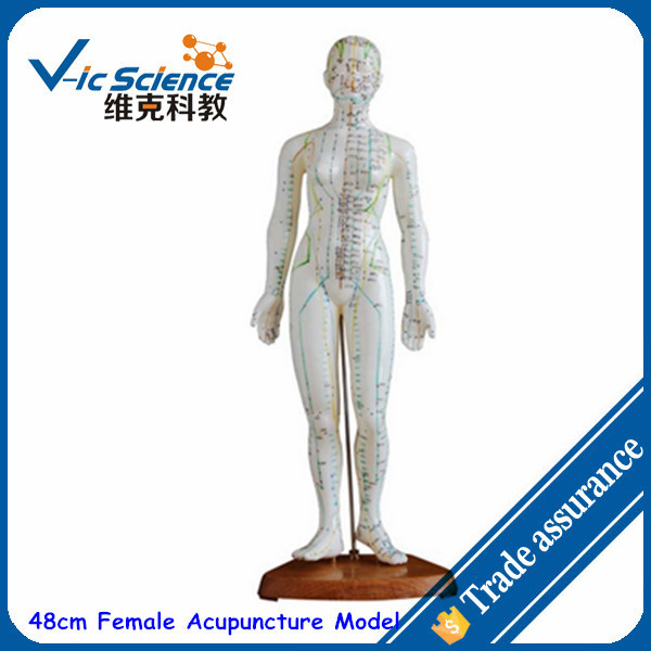 48cm Female Acupuncture Model