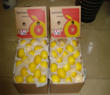 High quality citrus - OEM lemon production