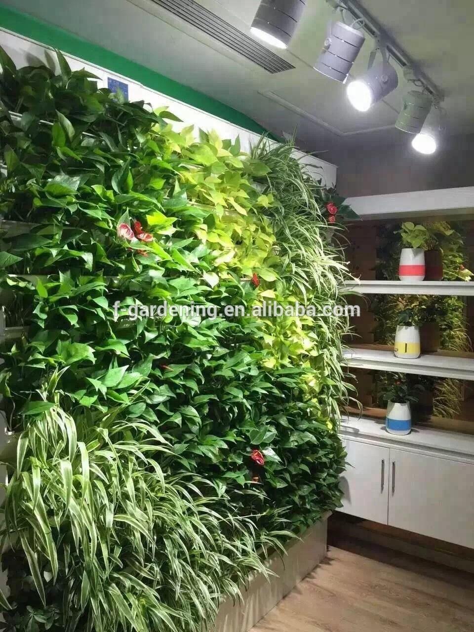 Casa y jard n sistemas de cultivo hidrop nico jard n - Jardin hidroponico ...