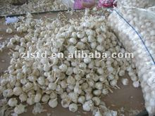 GARLIC SPECIFICATION