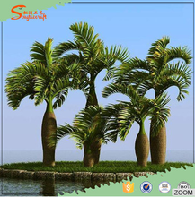 indoor large outdoor bonsai trees artificial bottle coconut palm coconut plant nursery types of ornamental plants
